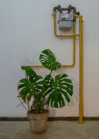 http://rafaeldubreu.com/files/gimgs/th-7_Philodendron I.jpg